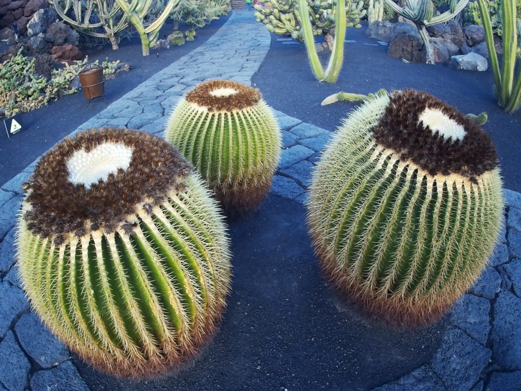 kaktusy Jardin de cactus