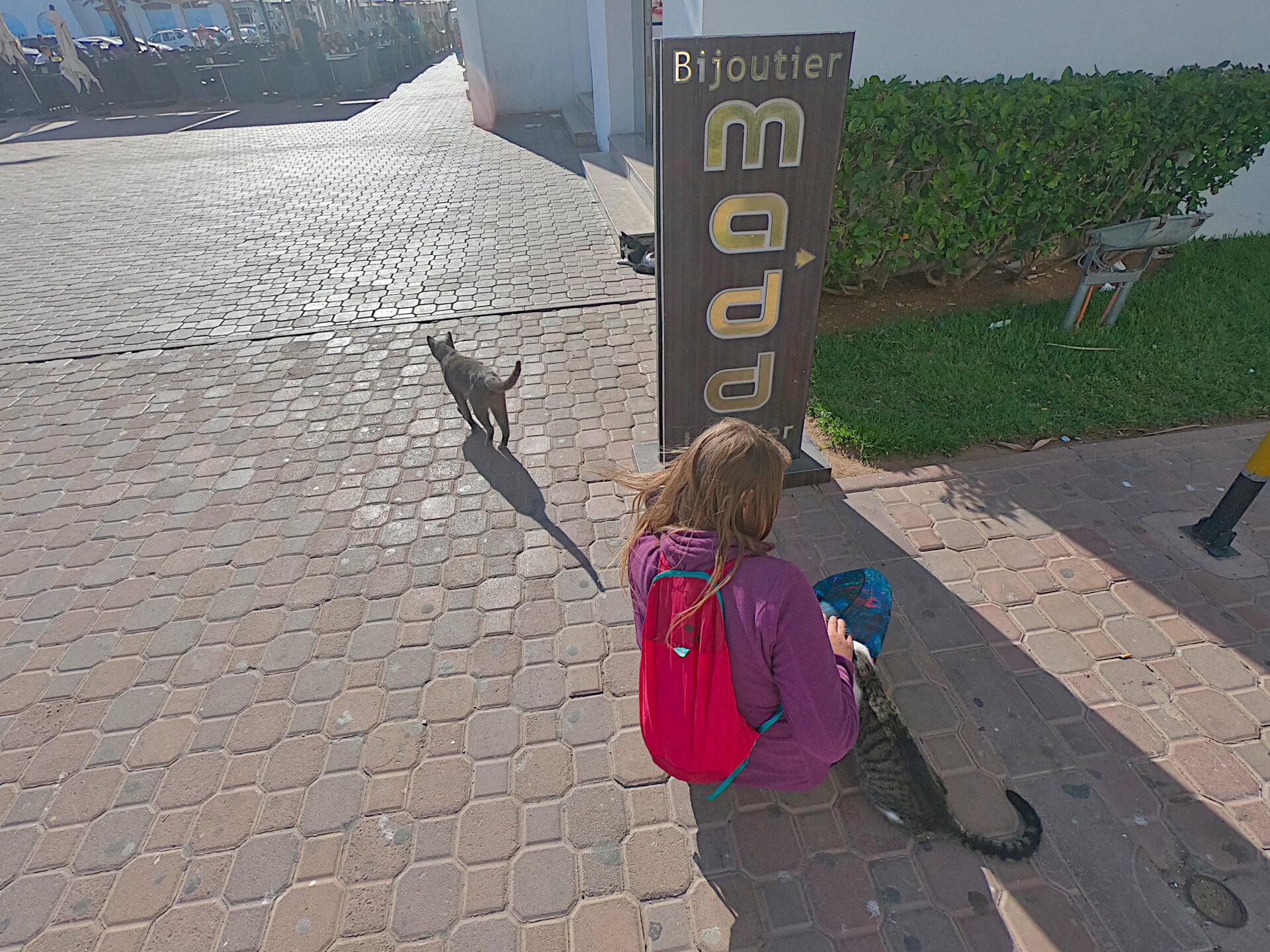 podróż do Maroka koty