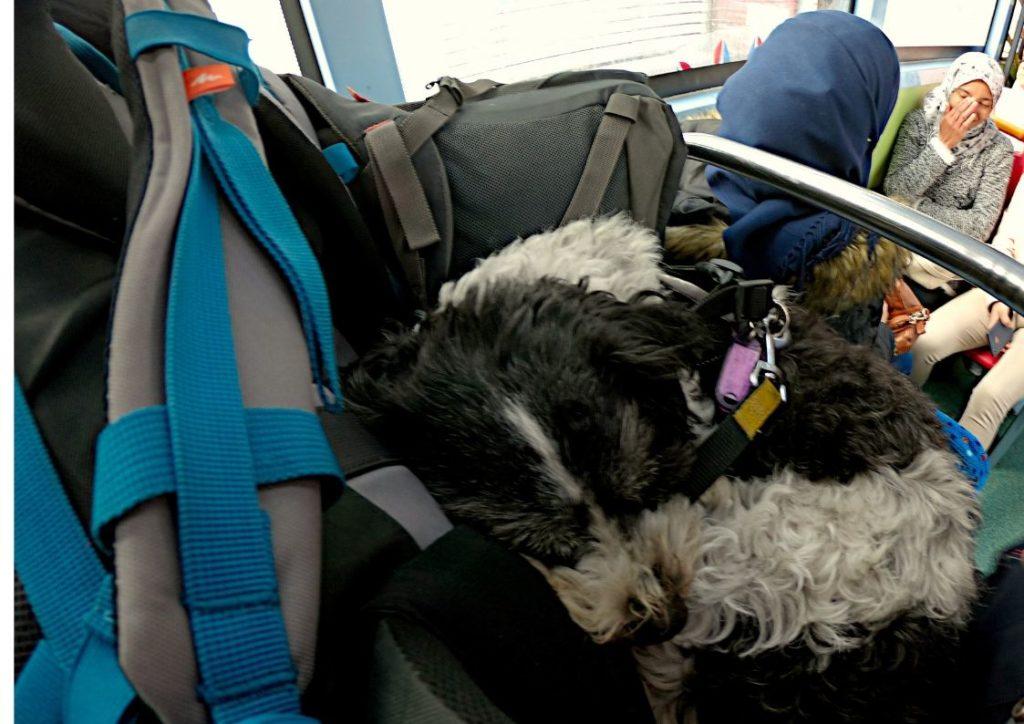 Podróże z psem Maroko